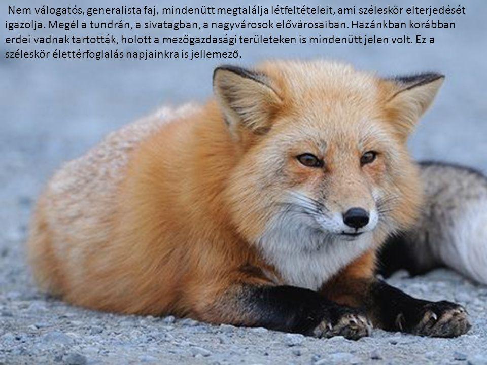 Nem válogatós, generalista faj, mindenütt megtalálja létfeltételeit, ami széleskör elterjedését igazolja. Megél a tundrán, a sivatagban, a nagyvárosok