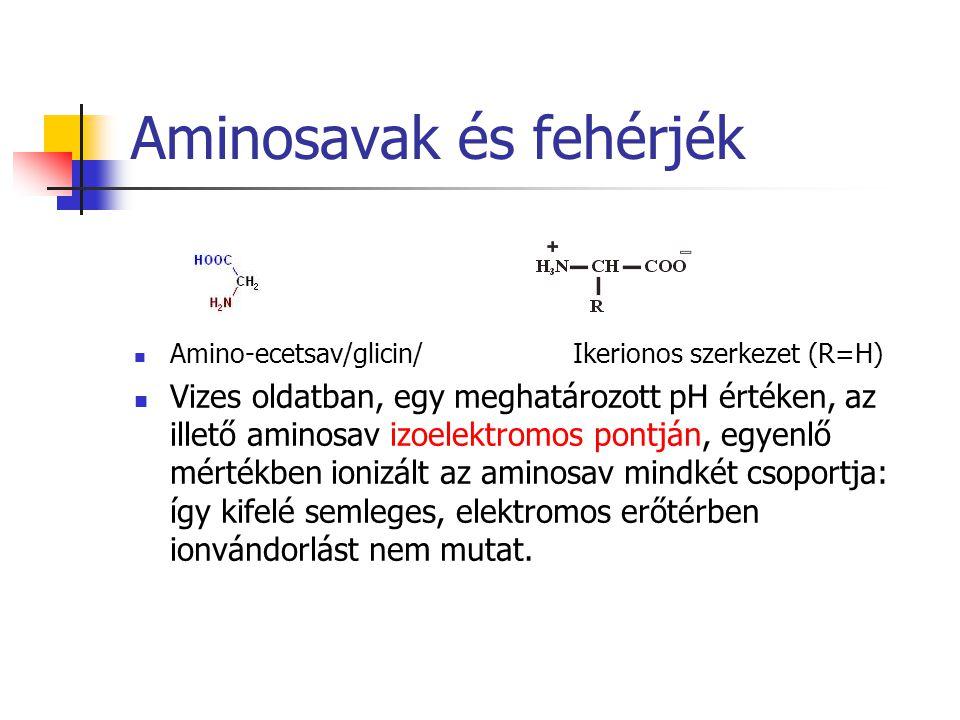 Aminosavak és fehérjék Amino-ecetsav/glicin/ Ikerionos szerkezet (R=H) Vizes oldatban, egy meghatározott pH értéken, az illető aminosav izoelektromos