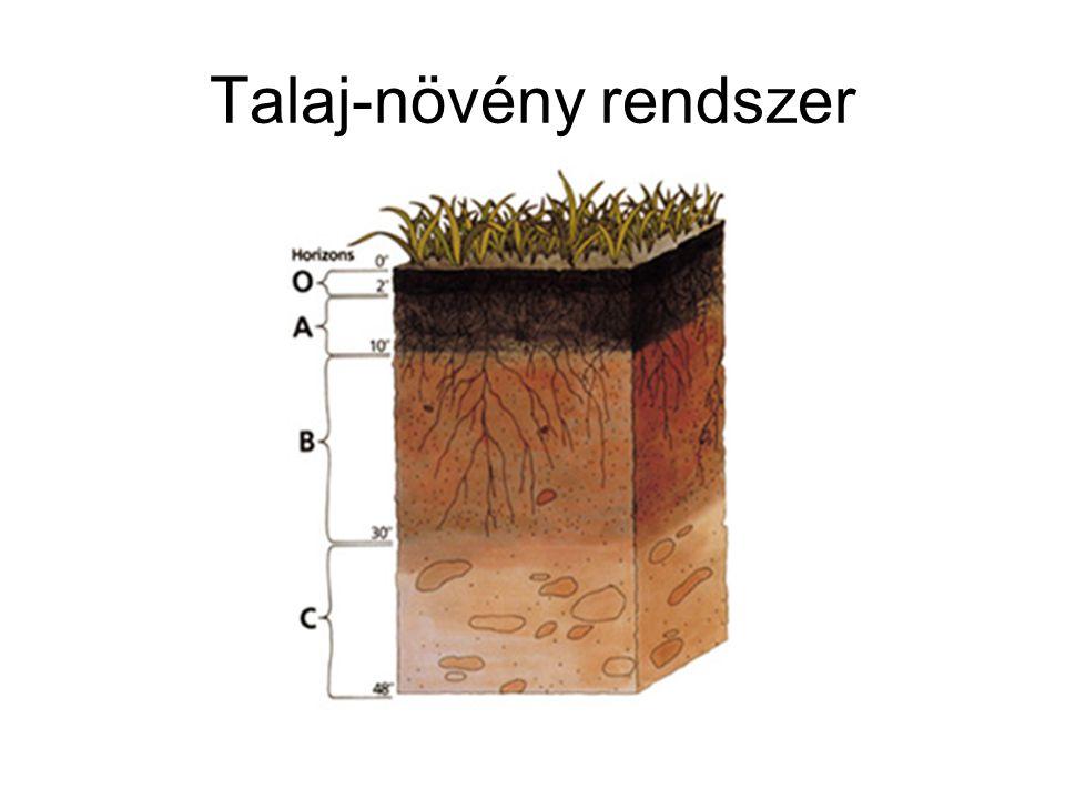 Talaj-növény rendszer