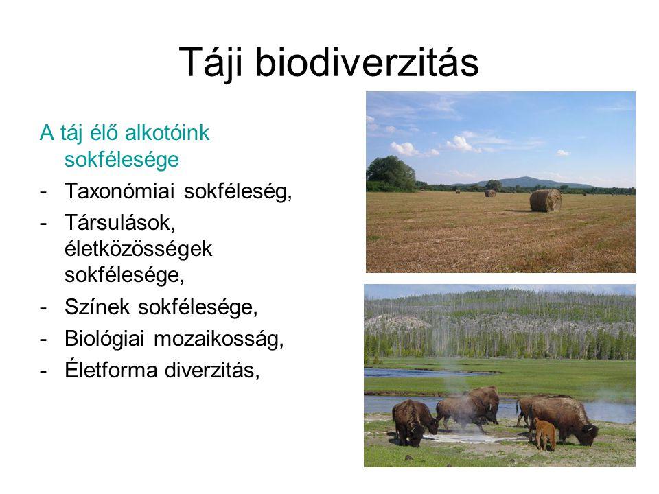 Táji biodiverzitás A táj élő alkotóink sokfélesége -Taxonómiai sokféleség, -Társulások, életközösségek sokfélesége, -Színek sokfélesége, -Biológiai mo