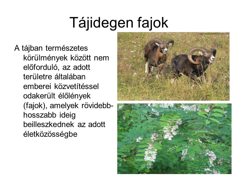 Tájidegen fajok A tájban természetes körülmények között nem előforduló, az adott területre általában emberei közvetítéssel odakerült élőlények (fajok)