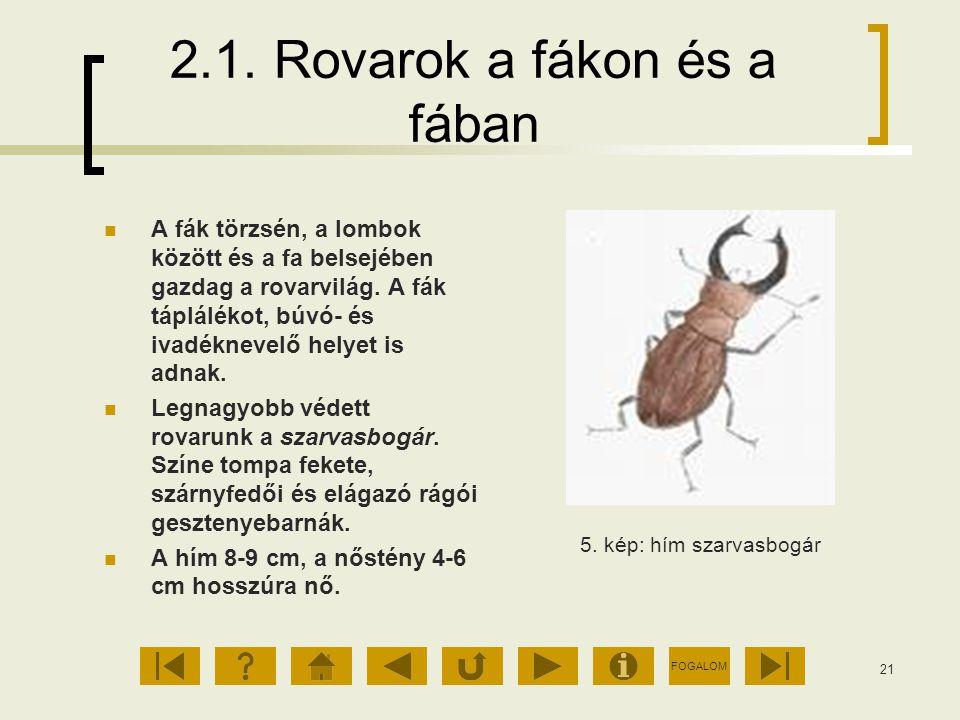 FOGALOM 21 2.1. Rovarok a fákon és a fában A fák törzsén, a lombok között és a fa belsejében gazdag a rovarvilág. A fák táplálékot, búvó- és ivadéknev