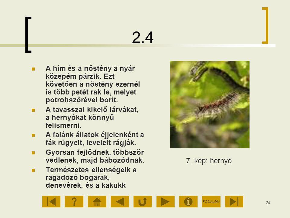 FOGALOM 24 2.4 A hím és a nőstény a nyár közepém párzik. Ezt követően a nőstény ezernél is több petét rak le, melyet potrohszőrével borít. A tavasszal