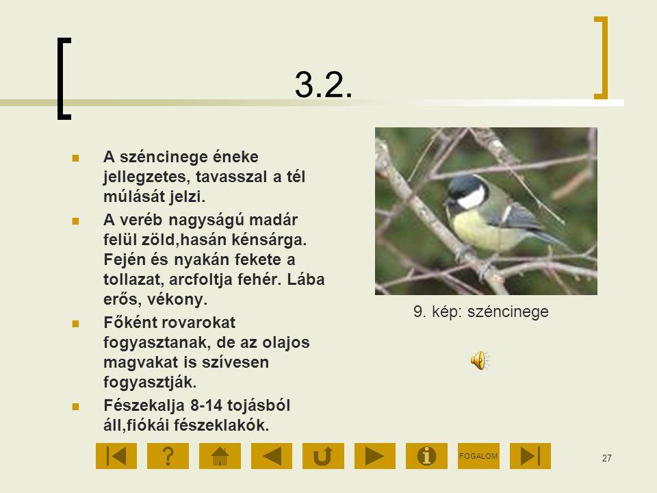 FOGALOM 27 3.2. A széncinege éneke jellegzetes, tavasszal a tél múlását jelzi. A veréb nagyságú madár felül zöld,hasán kénsárga. Fején és nyakán feket