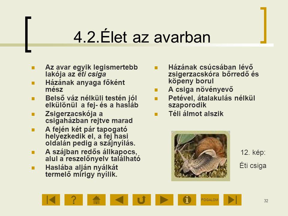 FOGALOM 32 4.2.Élet az avarban Az avar egyik legismertebb lakója az éti csiga Házának anyaga főként mész Belső váz nélküli testén jól elkülönül a fej-