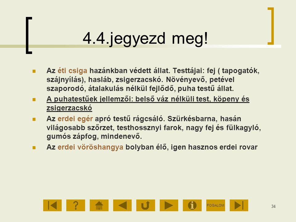 FOGALOM 34 4.4.jegyezd meg! Az éti csiga hazánkban védett állat. Testtájai: fej ( tapogatók, szájnyílás), hasláb, zsigerzacskó. Növényevő, petével sza