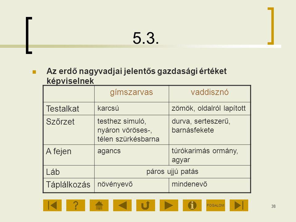 FOGALOM 38 5.3. Az erdő nagyvadjai jelentős gazdasági értéket képviselnek gímszarvasvaddisznó Testalkat karcsúzömök, oldalról lapított Szőrzet testhez