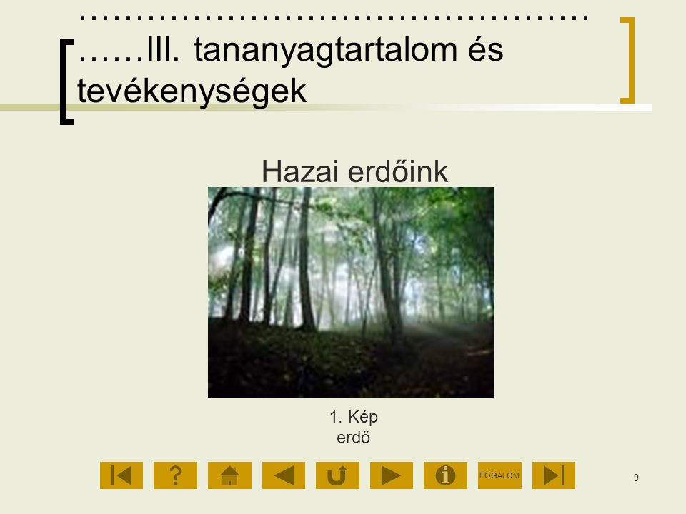 FOGALOM 9 ……………………………………… ……III. tananyagtartalom és tevékenységek Hazai erdőink 1. Kép erdő