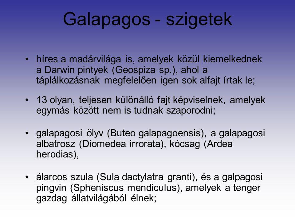 Galapagos - szigetek híres a madárvilága is, amelyek közül kiemelkednek a Darwin pintyek (Geospiza sp.), ahol a táplálkozásnak megfelelően igen sok al