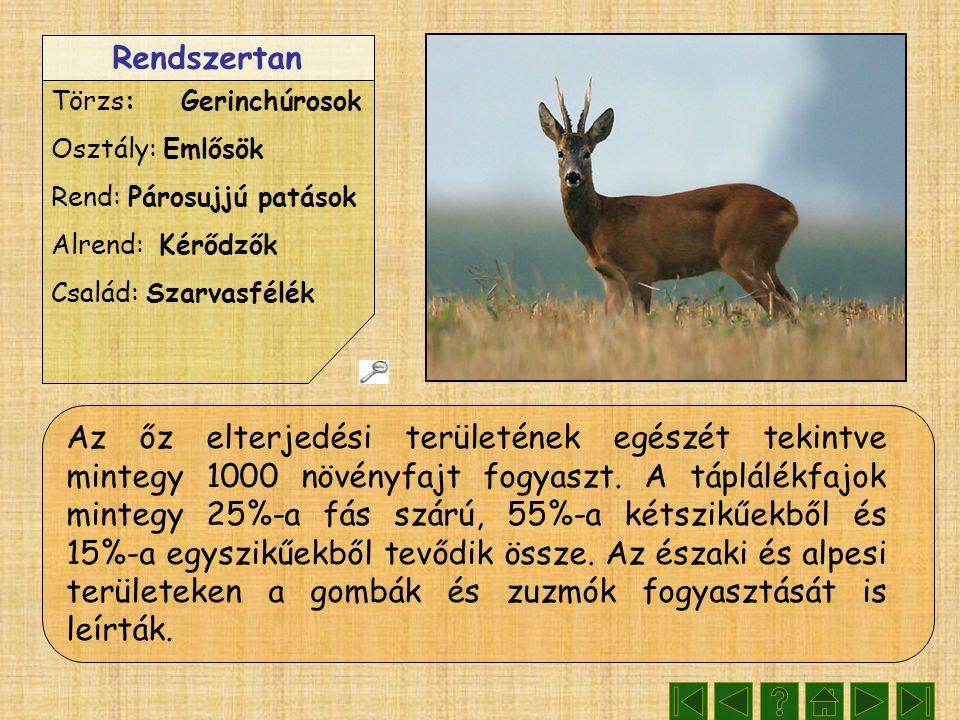 Rendszertan Törzs: Gerinchúrosok Osztály: Emlősök Rend: Párosujjú patások Alrend: Kérődzők Család: Szarvasfélék Az őz elterjedési területének egészét