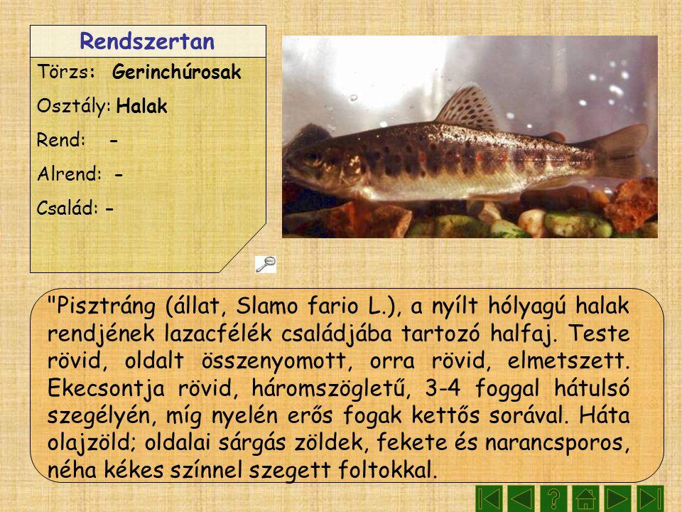 Rendszertan Törzs: Gerinchúrosak Osztály: Halak Rend: - Alrend: - Család: - Pisztráng (állat, Slamo fario L.), a nyílt hólyagú halak rendjének lazacfélék családjába tartozó halfaj.
