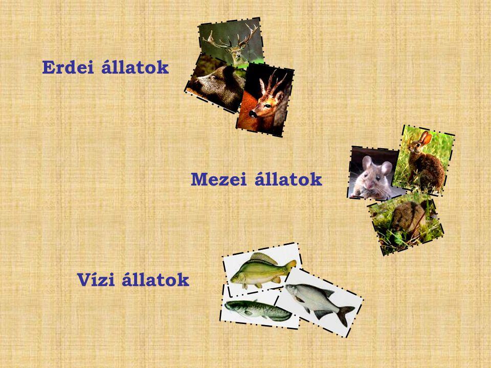 Erdei állatok Mezei állatok Vízi állatok
