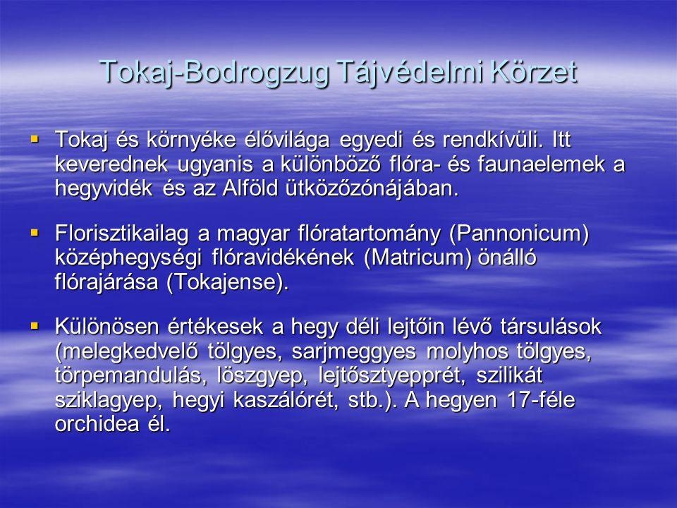 Tokaj-Bodrogzug Tájvédelmi Körzet  Tokaj és környéke élővilága egyedi és rendkívüli. Itt keverednek ugyanis a különböző flóra- és faunaelemek a hegyv