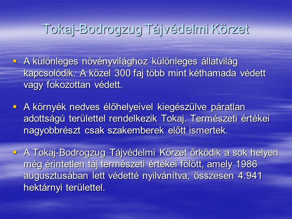 Tokaj-Bodrogzug Tájvédelmi Körzet  A különleges növényvilághoz különleges állatvilág kapcsolódik. A közel 300 faj több mint kéthamada védett vagy fok