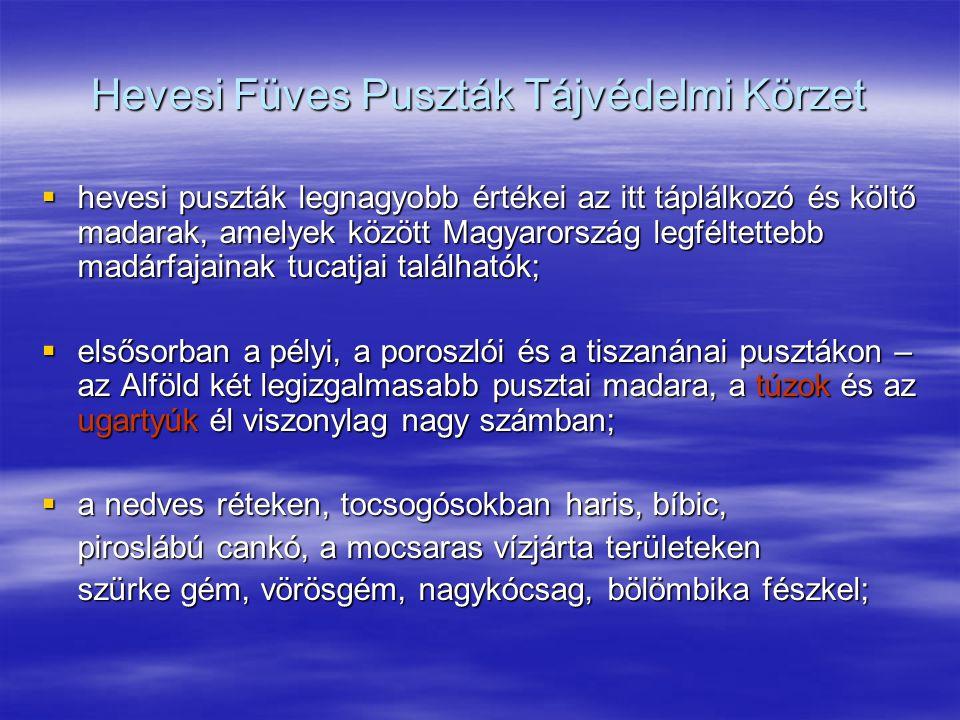 Hevesi Füves Puszták Tájvédelmi Körzet  hevesi puszták legnagyobb értékei az itt táplálkozó és költő madarak, amelyek között Magyarország legféltette