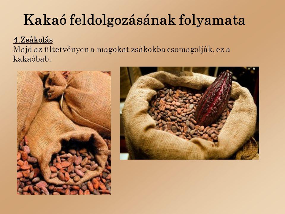 Kakaó feldolgozásának folyamata 4.Zsákolás Majd az ültetvényen a magokat zsákokba csomagolják, ez a kakaóbab.