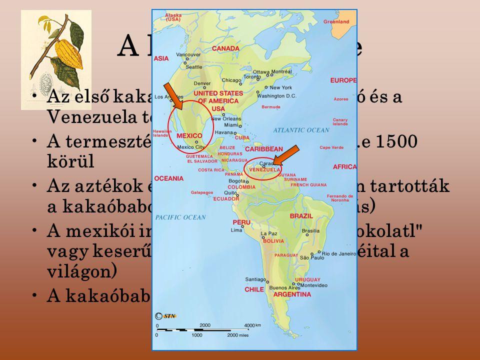 """A kakaó története Az első kakaófa ültetvények- Mexikó és a Venezuela területén A termesztését a maják kezdték el i.e 1500 körül Az aztékok és a mayák nagy becsben tartották a kakaóbabot (varázsital, gyógyhatás) A mexikói indiánok """"ízes itala , a sokolatl vagy keserűvíznek (az első csokoládéital a világon) A kakaóbab fizetőeszköz volt"""