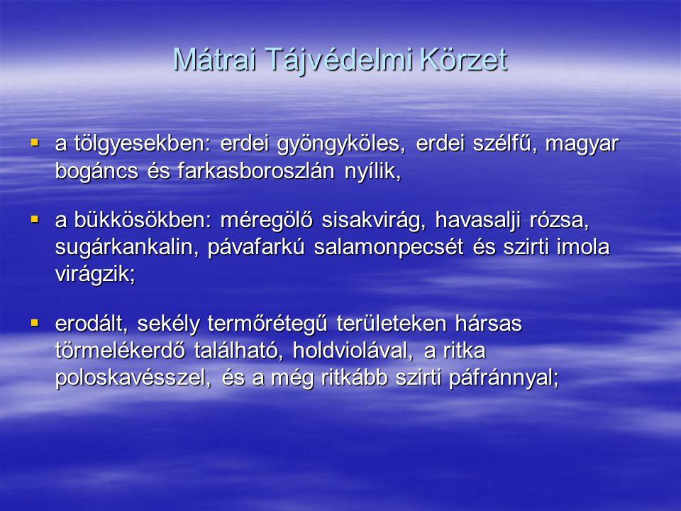 Mátrai Tájvédelmi Körzet  a tölgyesekben: erdei gyöngyköles, erdei szélfű, magyar bogáncs és farkasboroszlán nyílik,  a bükkösökben: méregölő sisakv