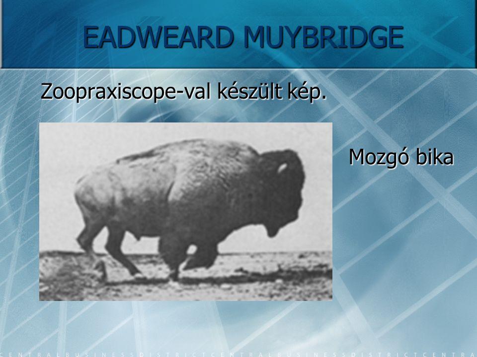 Zoopraxiscope-val készült kép. Mozgó bika