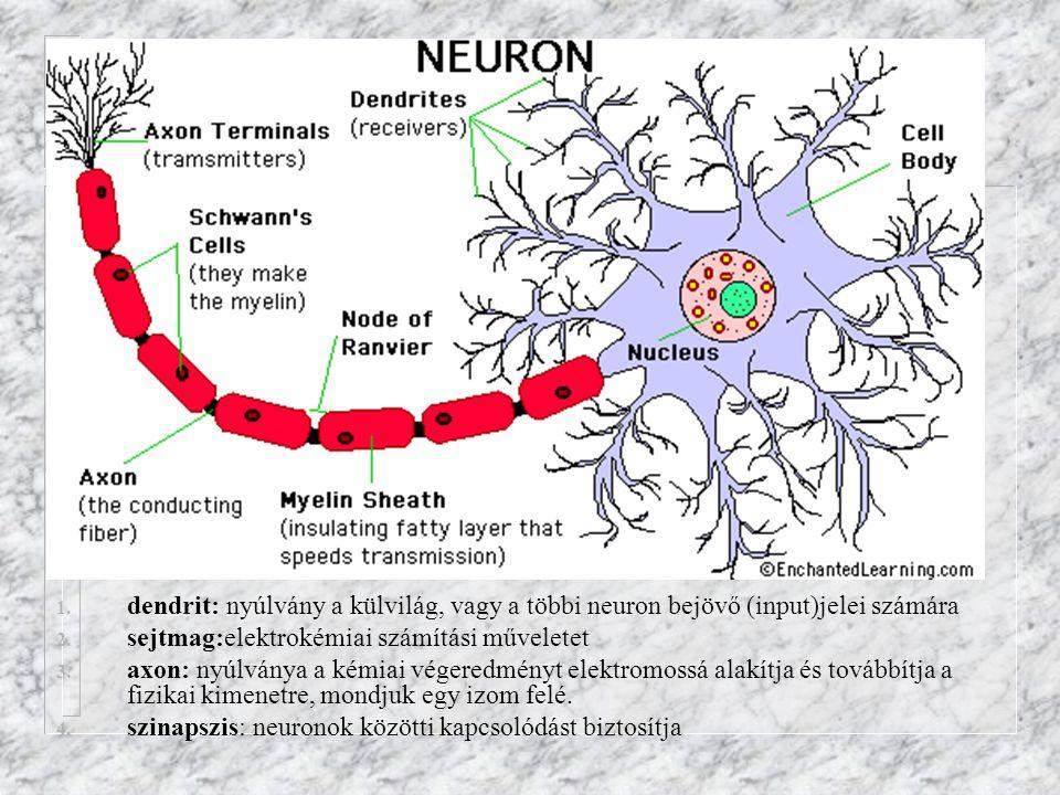 1. dendrit: nyúlvány a külvilág, vagy a többi neuron bejövő (input)jelei számára 2. sejtmag:elektrokémiai számítási műveletet 3. axon: nyúlványa a kém