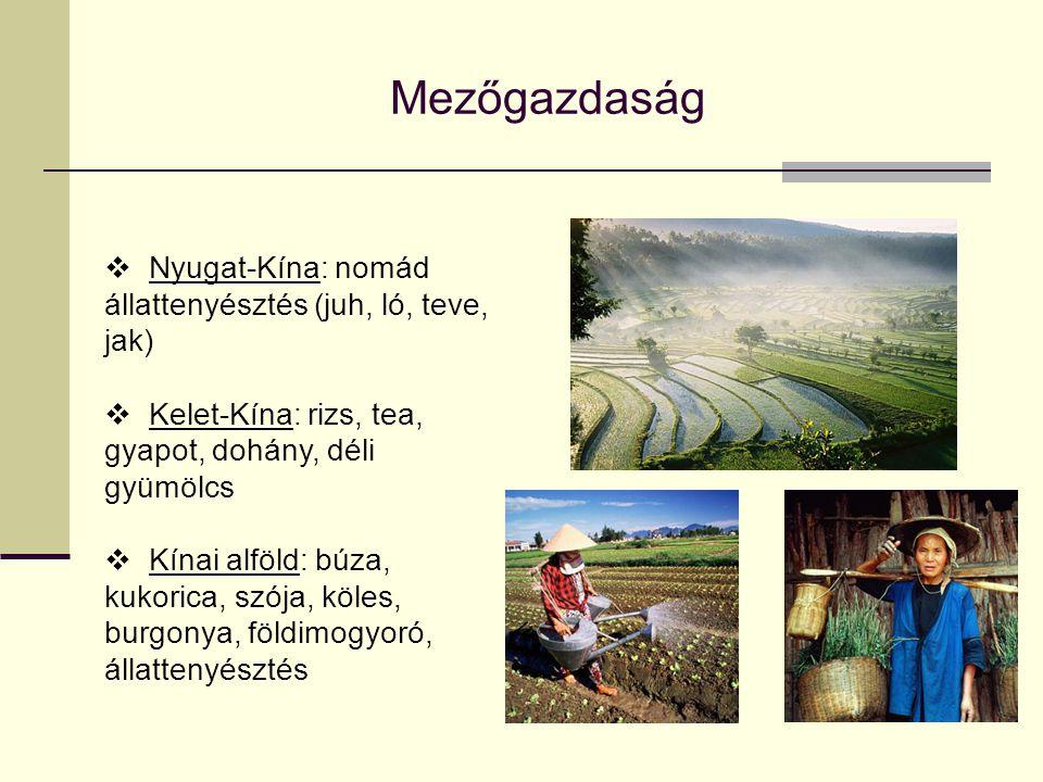 Mezőgazdaság  Nyugat-Kína: nomád állattenyésztés (juh, ló, teve, jak)  Kelet-Kína: rizs, tea, gyapot, dohány, déli gyümölcs  Kínai alföld: búza, ku