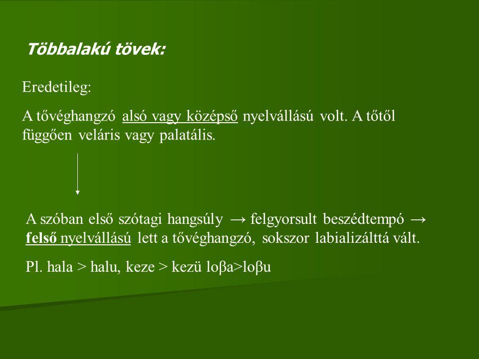 Többalakú tövek: Eredetileg: A tővéghangzó alsó vagy középső nyelvállású volt. A tőtől függően veláris vagy palatális. A szóban első szótagi hangsúly