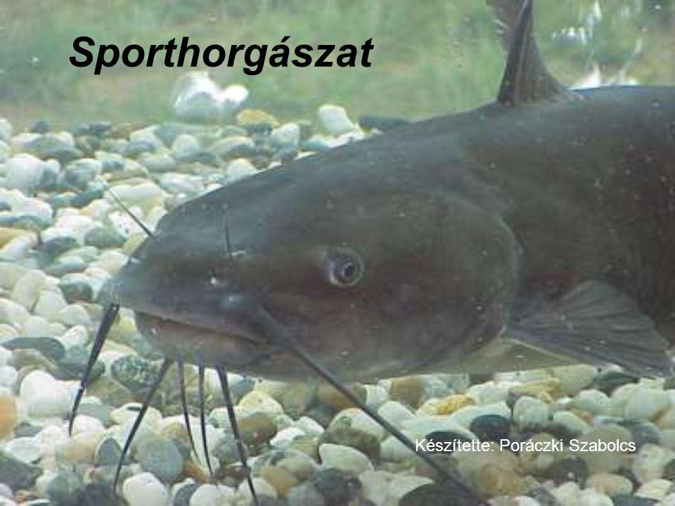 Sporthorgászat Készítette: Poráczki Szabolcs