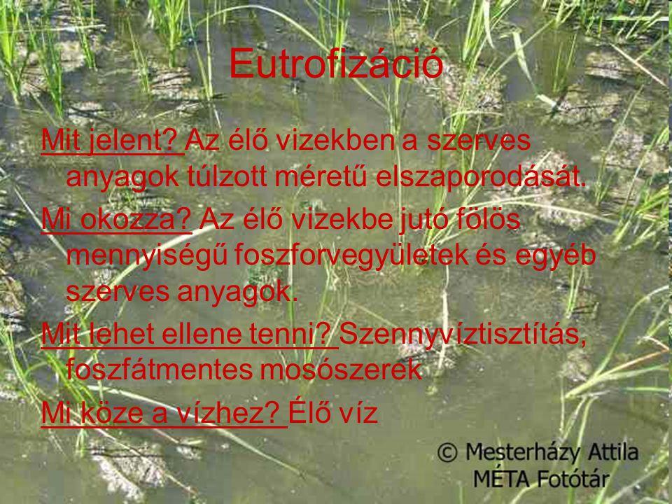 Eutrofizáció Mit jelent? Az élő vizekben a szerves anyagok túlzott méretű elszaporodását. Mi okozza? Az élő vizekbe jutó fölös mennyiségű foszforvegyü