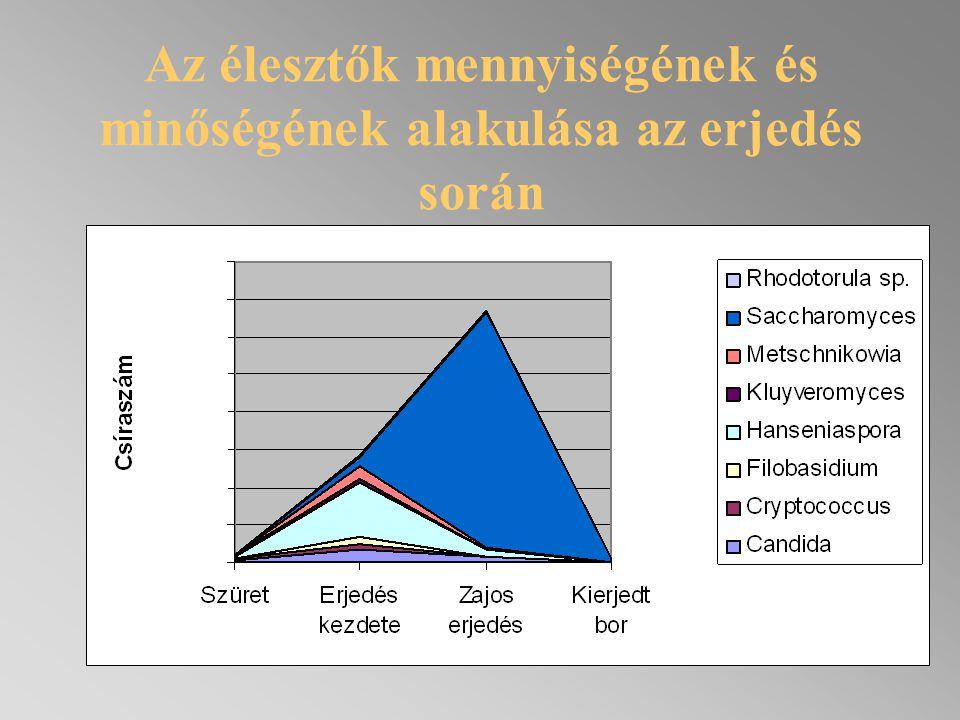 Anyag és módszer Mintavétel (sz ő l ő, must, frissen kierjedt bor) Izoláció A törzsek identifikációja - Hagyományos vizsgálatok (alaktani, élettani) - Törzsek azonosítása (kromoszóma vizsgálatok) Kiválasztott törzsek (10 saját tenyészet és a kereskedelmi BDX törzs) felszaporítása Mikrovinifikáció (10 9 sejt/g, 20ºC) Rutin és m ű szeres analitikai vizsgálatok Érzékszervi bírálat (20pontos, profil analízis)