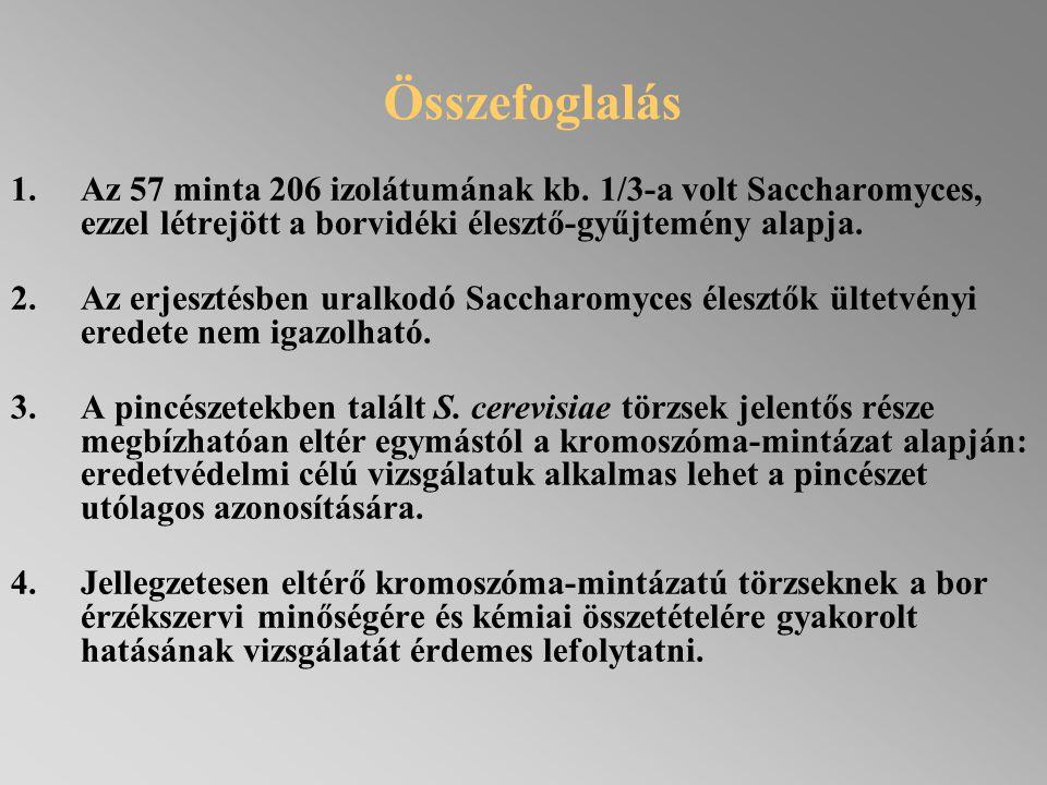 Összefoglalás 1.Az 57 minta 206 izolátumának kb. 1/3-a volt Saccharomyces, ezzel létrejött a borvidéki élesztő-gyűjtemény alapja. 2.Az erjesztésben ur
