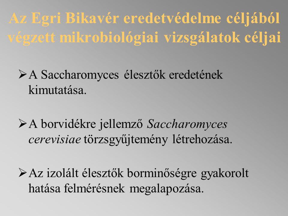 Az Egri Bikavér eredetvédelme céljából végzett mikrobiológiai vizsgálatok céljai  A Saccharomyces élesztők eredetének kimutatása.  A borvidékre jell