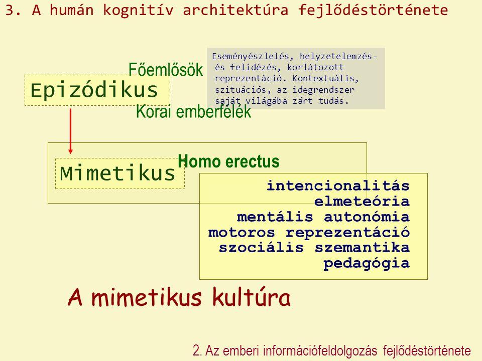 Epizódikus Mimetikus Homo erectus Főemlősök Korai emberfélék A mimetikus kultúra 2. Az emberi információfeldolgozás fejlődéstörténete intencionalitás