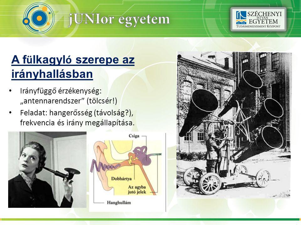 """A f ü lkagyl ó szerepe az irányhallásban Irányfüggő érzékenység: """"antennarendszer"""" (tölcsér!) Feladat: hangerősség (távolság?), frekvencia és irány me"""