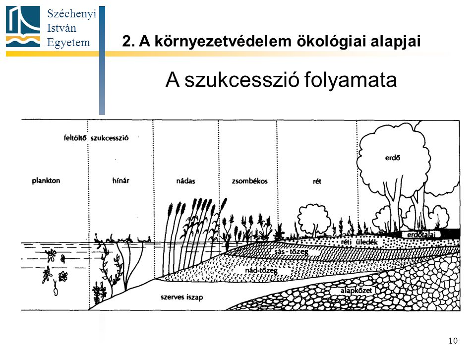 Széchenyi István Egyetem 10 A szukcesszió folyamata 2. A környezetvédelem ökológiai alapjai