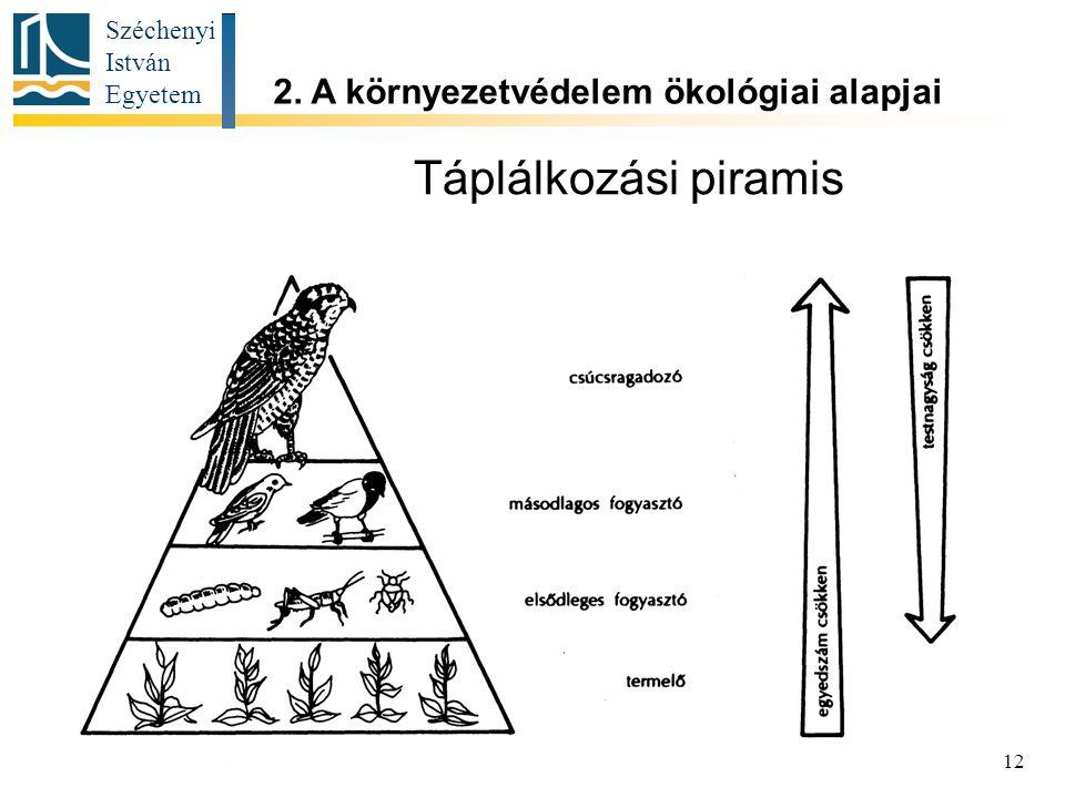 Széchenyi István Egyetem 12 Táplálkozási piramis 2. A környezetvédelem ökológiai alapjai