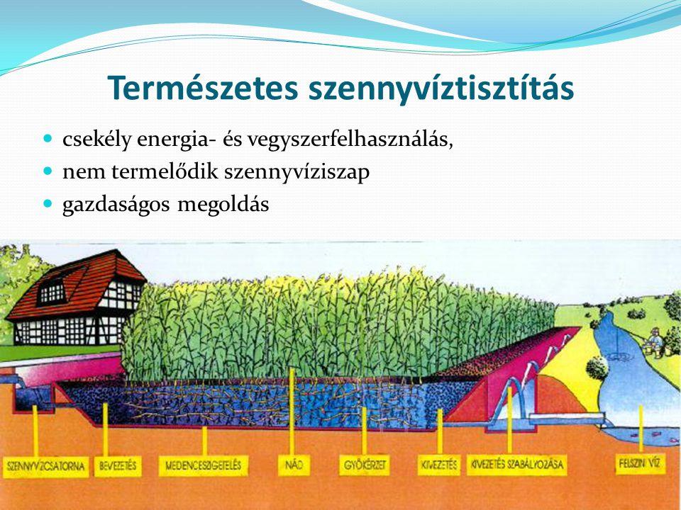 Természetes szennyvíztisztítás csekély energia- és vegyszerfelhasználás, nem termelődik szennyvíziszap gazdaságos megoldás