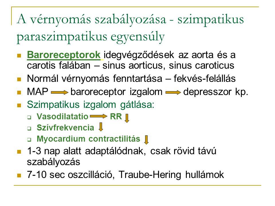 A vérnyomás szabályozása - szimpatikus paraszimpatikus egyensúly Baroreceptorok idegvégződések az aorta és a carotis falában – sinus aorticus, sinus c