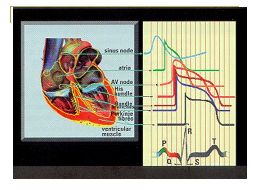 A koronária betegség gyógyszeres kezelése Az oxigén igény és kínálat közötti egyensúly felborulása: 1.Fokozott igény (Fr, izommunka, magas vérnyomás) 2.Csökkent perfúzió (érszűkület, csökkent perctérfogat pl.