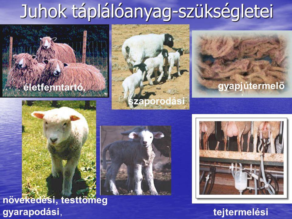Juhok táplálóanyag-szükségletei életfenntartó,, gyapjútermelő szaporodási növekedési, testtömeg gyarapodási, tejtermelési