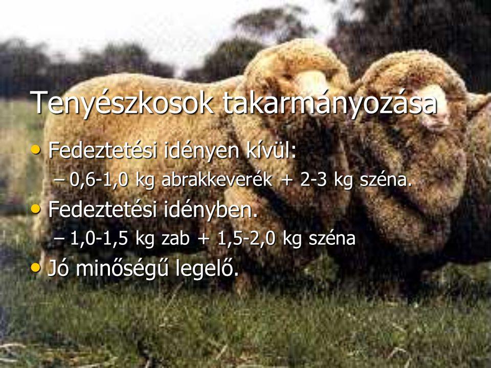 Tenyészkosok takarmányozása Fedeztetési idényen kívül: Fedeztetési idényen kívül: –0,6-1,0 kg abrakkeverék + 2-3 kg széna. Fedeztetési idényben. Fedez