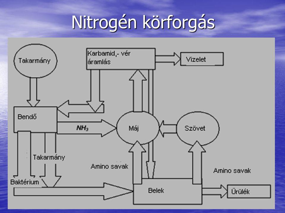 Nitrogén körforgás
