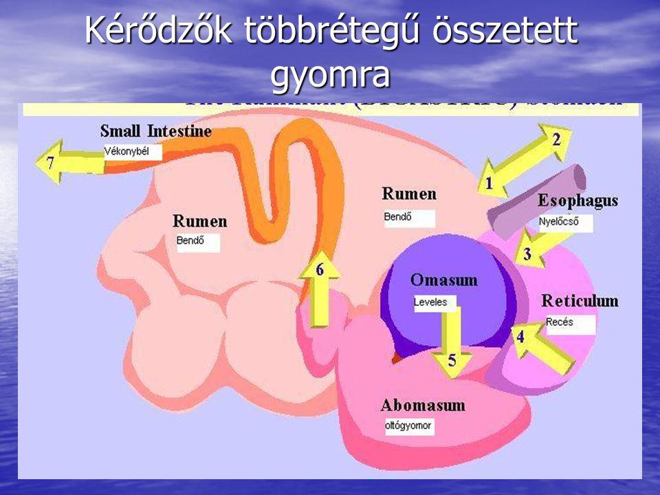 Kérődzők többrétegű összetett gyomra