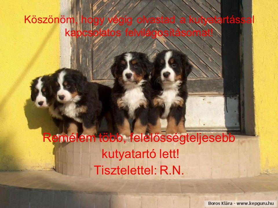 Köszönöm, hogy végig olvastad a kutyatartással kapcsolatos felvilágosításomat! Remélem több, felelősségteljesebb kutyatartó lett! Tisztelettel: R.N.