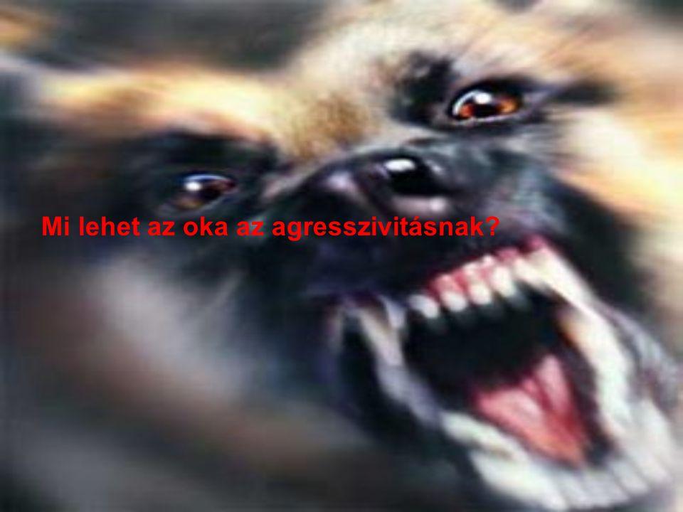 Mi lehet az oka az agresszivitásnak?