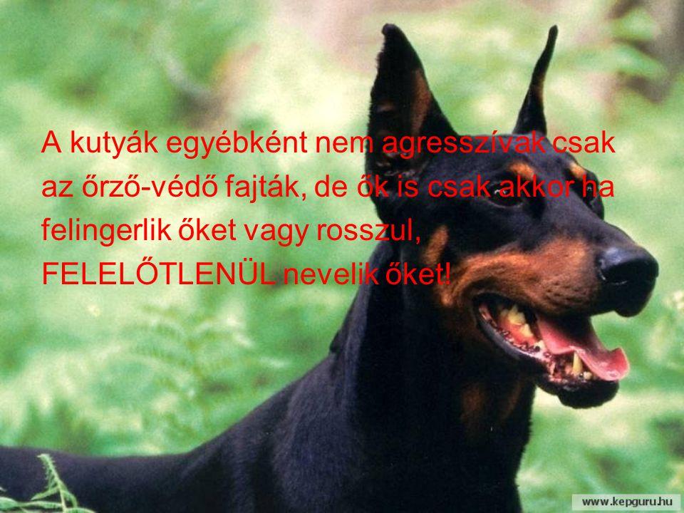 A kutyák egyébként nem agresszívak csak az őrző-védő fajták, de ők is csak akkor ha felingerlik őket vagy rosszul, FELELŐTLENÜL nevelik őket!