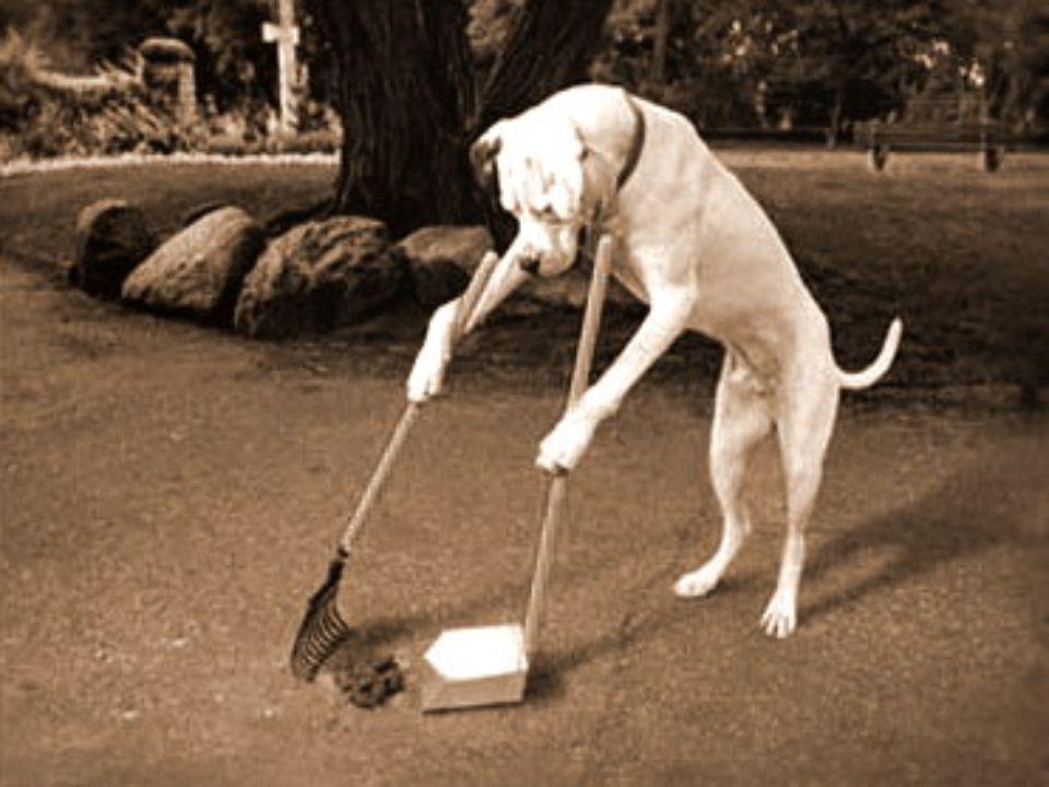 Gondolok itt az öreg hölgyekre illetve bácsikra akik már a fájós derekukkal nem tudnak a kutyaürülékért lehajolni.
