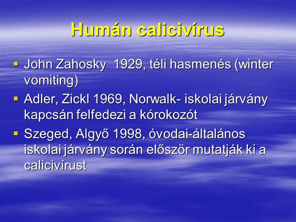 Humán calicivírus  John Zahosky 1929, téli hasmenés (winter vomiting)  Adler, Zickl 1969, Norwalk- iskolai járvány kapcsán felfedezi a kórokozót  Szeged, Algyő 1998, óvodai-általános iskolai járvány során először mutatják ki a calicivírust