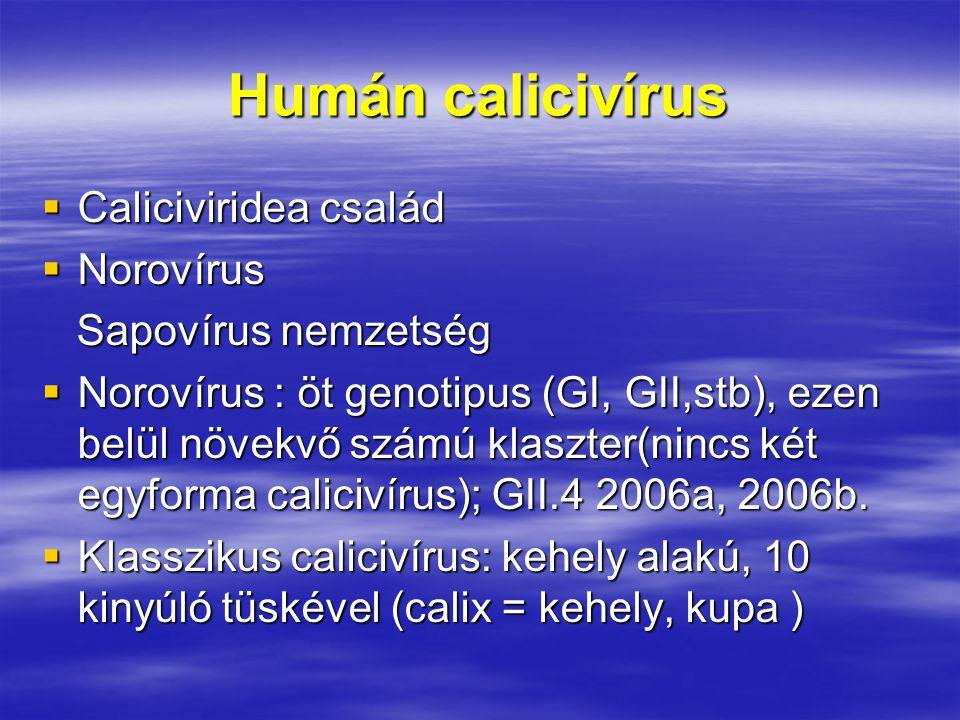 Humán calicivírus  Caliciviridea család  Norovírus Sapovírus nemzetség Sapovírus nemzetség  Norovírus : öt genotipus (GI, GII,stb), ezen belül növekvő számú klaszter(nincs két egyforma calicivírus); GII.4 2006a, 2006b.