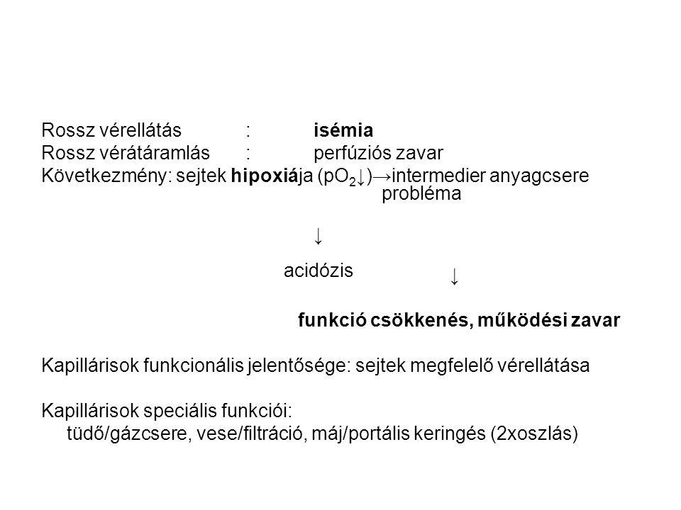 Rossz vérellátás:isémia Rossz vérátáramlás: perfúziós zavar Következmény: sejtek hipoxiája (pO 2 ↓)→intermedier anyagcsere probléma ↓ funkció csökkené