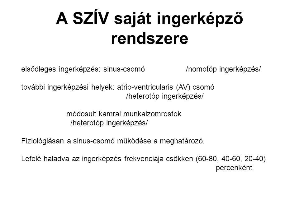 A SZÍV saját ingerképző rendszere elsődleges ingerképzés: sinus-csomó/nomotóp ingerképzés/ további ingerképzési helyek: atrio-ventricularis (AV) csomó